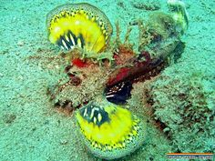 Hands up who knows what this is? #scuba #padi