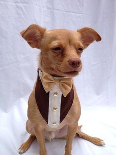 Custom Pet Tuxedo Bandana by TunaWearPets on Etsy Pet Shop, Dog Grooming Shop, Diy Dog Collar, Pet Collars, Dog Items, Dog Sweaters, Dog Coats, Dog Bandana, Diy Stuffed Animals
