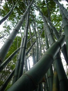 47 Best Bamboo Images Beautiful Places Nature Woods