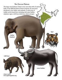 Learn about animals from habitats around the world with simple, fun activities on Exploringnature.org Biomes, Fun Activities, Habitats, Elephant, Around The Worlds, Learning, Simple, Illustration, Animals