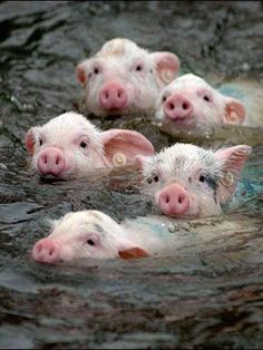Who knew these guys loved to swim?