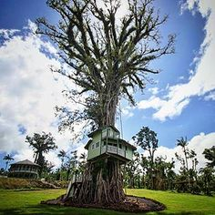 Lupe Sina Treesort is the only treehouse hotel in Samoa.  Located in the hills of Tiavi overlooking the beautiful south coast and the rainforest of Upolu.  http://ift.tt/233zg19  #lupesina #treesort #samoa #treehotel #tiavi #upolu #rainforest Re-post by Hold With Hope
