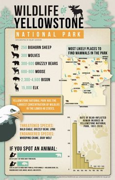 Yellowstone #nationalpark wildlife infographic  (January for wolves, elk, bison, antelope, ravens)