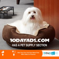 10dayads.com has a pet supply section #PetAds #SellyourPet #AdvertisementOfPets #FreePetsClassifiedAds