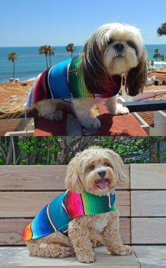 Minnie the Shih Tzu and Mocha the Shih Poo rocking their handmade Baja Dog Ponchos.