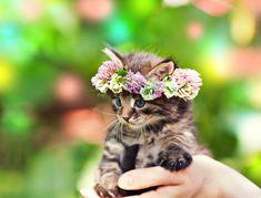 Mały, kotek, wianuszek