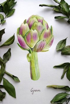 Vegetable Illustration, Plant Illustration, Botanical Illustration, Watercolor Illustration, Watercolor Fruit, Fruit Painting, Watercolor Flowers, Watercolour, Wall Drawing