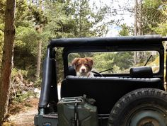 Let's see those Jeep Dogs! It's Adopt a shelter dog month! If this photo gave you FOMO you know what you need to do! Go! Fetch a Fido!!! #mekmagnet #jeepdogs #jeeplife #trailbuddy #jeepwrangler #jeeppets #adventuredog #shelterdog #adoptdontbuy #fetchfido Jeep Life, Shelter Dogs, Jeep Wrangler, Trail, Pets, Jeep Wranglers, Rescue Dogs, Dog Houses, Animals And Pets