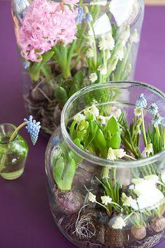 De hyacinten en blauwe druifjes liggen alweer (bijna) in de winkels, maar op het echte voorjaar moeten we nog even wachten.