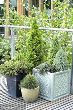 Balkon, początki. w Babiniec Cafe - Forum Kobiet