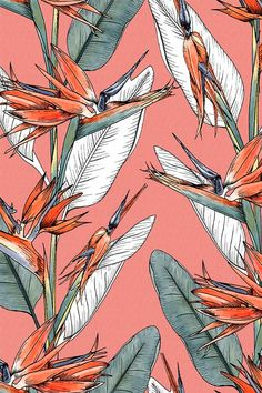 Bird of Paradise Exotic Tropical Bright Floral Print Coral by Laura Hickman Seamless Repeat Royalty-Free Stock Pattern - Coral bird of paradise floral print by Laura Hickman available on Patternbank print patterns Geomet - Print Wallpaper, Pattern Wallpaper, Geometric Wallpaper, Fabric Wallpaper, Exotic Birds, Exotic Flowers, Colorful Birds, Pattern Art, Print Patterns