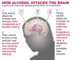 How alcohol attacks the brain.  It's always interesting to know the science behind how things affect our bodies.