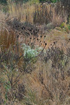 Garden turning to winter | Flickr -