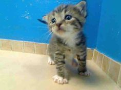 Little doll.needs rescue. Visit pets on deathrow on facebook New York City. To help now.