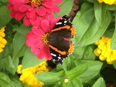 Butterfly on flower from above