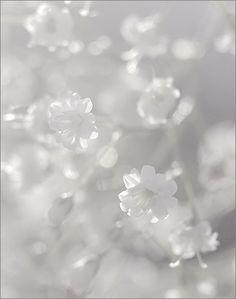 White Flower  Flickr - Photo Sharing!
