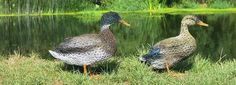 Helen Godfrey - ducks