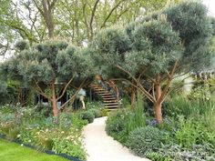 These large specimens of Pinus sylvestris 'Watereri' were a real feature of The Winton Beauty of Mathematics Garden, at The RHS Chelsea Flower Show Garden Architecture, Garden Buildings, Chelsea Flower Show, Coastal Gardens, Small Gardens, Garden Trees, Garden Paths, Organic Gardening Magazine, Chelsea Garden