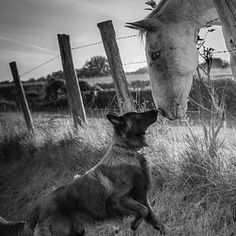 Horse Photograph - Friend's Kiss ;-) by Christophe. Horse and dog kiss at the fence.
