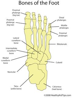 foot anatomy | foot and ankle bones, ligaments, tendons and more, Human Body