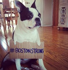 After the #BostonMarathon Tragedy - Boston Terrier Dog Showing Support! #BostonStrong → http://www.bterrier.com/after-the-boston-marathon-tragedy-boston-terrier-dog-showing-support-photo/ - https://www.facebook.com/bterrierdogs