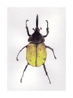 Hercules Beetle Wall Art Prints by Misa | Minted