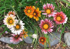 perennial garden ideas   Subtle colour designs on a simple daisy shape.