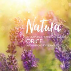 doTERRA - Madeline's Cuisine Melaleuca, Natural Solutions, Essential Oils, Nature, Plants, Kitchens, Naturaleza, Plant, Nature Illustration