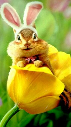 Easter chipmunk bunny cuteness
