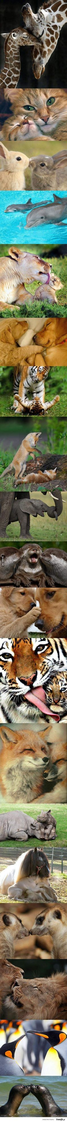 Cute baby animals & their parents