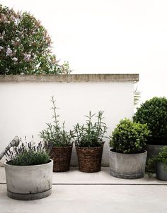 not every garden pot needs to be naff - here are some stylish concrete pots to add an edge to your garden porch