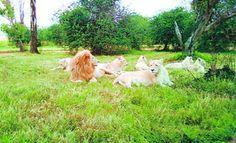 Lion Book, National Parks, Animals, Animales, Animaux, Animal, Animais