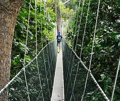 Longest Canopy Walkway: Taman Negara Canopy Walkway, Kuala Lumpur, #Malaysia #iGottaTravel