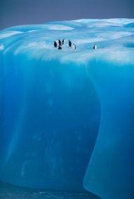 Penguins On Ice Berg