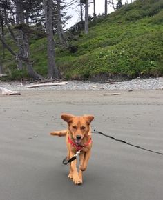 Eevees first visit to the beach http://ift.tt/2rcYhwj