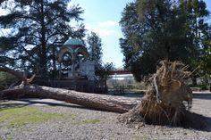 Monumento a Chattrapputi , principe indiano e un albero sradicato dal vento