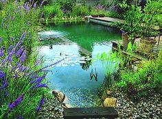 Une piscine naturelle bannit les produits chimiques