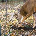 Bring More Deer to Your Tree Stand With a Poor-Man's Food Plot | Field & Stream