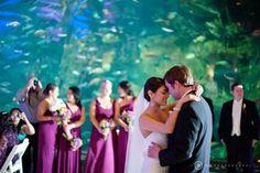 Wedding Photography Thursdays: Aquarium Weddings, read on at My Inspired Wedding! #myinspiredwedding #weddingphotography #weddingvenue