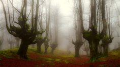 Los bosques de Gorbea