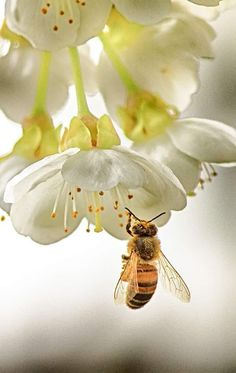 Beautiful Creatures, Animals Beautiful, Bee Pictures, I Love Bees, Bees And Wasps, Bee Art, Bugs And Insects, Save The Bees, Bee Happy