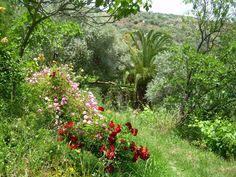 Alpujarra Backpackers Mini Hostel,  La Alpujarra, Spain. Surrounded by wooded terraced land with fruit trees - help yourself to fruit in season, including oranges, loquats, figs, grapes, persimmons, almonds and more http://www.organicholidays.co.uk/at/3243.htm