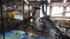 Twitter / L_ssar: #FossilFriday Iguanodon ...