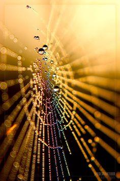 micro spider web