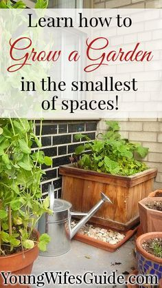 Learn How to Grow a Garden in the Smallest of Spaces! You can get a jump start and plan your Fall/Winter garden today (maybe even a small herb garden on your window sill)??