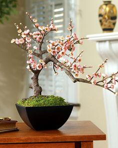 Cherry Bonsai Tree ~ Beauty in simplicity, drama in understatement, our artificial cherry blossom bonsai can bring the perfect touches of color and balance to a room. The delicate -- and incredibly life-like --cherry blossoms are available in pink or white.