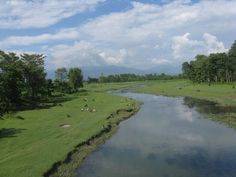 Koshi Tappu Wildlife Reserve is a protected area in the Terai of eastern Nepal. Mixed deciduous riverine forest, grasslands and marshy vegetation and 514 plant species are found including Kapok, sugarcane, reed, Cattail, Imperata cylindrica, eel grass, and species of Eichhornia, Hydrilla, Azolla and Lotus. A wide range of faunal species inhabit the protected area. The 31 species of mammals with 485 bird species are found here.  www.riverholidaysnepal.com