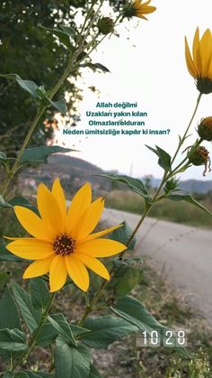 Snap Quotes, Hessa, Hafiz, Allah Islam, Nature Pictures, Wallpaper S, Beautiful Words, Cool Words, Karma
