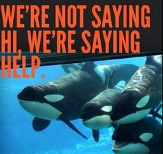 Captivity is animal cruelty. Don't go to Seaworld or Zoos, they don't treat their animals fairy.