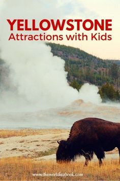 Things to see and do at Yellowstone National Park with kids | See the Buffalo, geysers and hot springs | National Parks with kids
